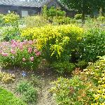 Perennial Garden - Goldenrod in bloom