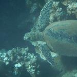 Turtle spotted at our first dive site!