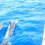 Mother and baby dolphin swimming right next to our boat!