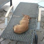 Stray dog asleep on an hotel sunbed!!