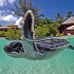 Baby sea turtles we released into the ocean!