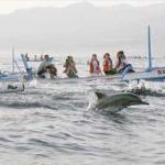 ikan lumba-lumba