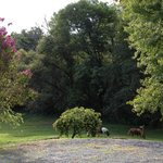 Step off the front porch and see the 4 mini-ponies grazing