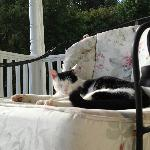 Big Boss cat curled up on a chair with us on the front porch