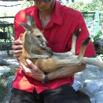 one on one with baby Kangaroo