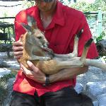 one on one with baby Kangaroo