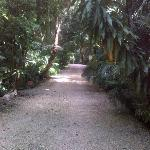 sub tropical splendor