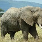 loved seeing elephants