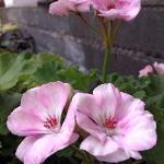 Preety flowers in the garden..