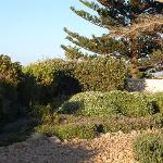 The garden at Abalone