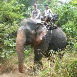 Victoria our elephant