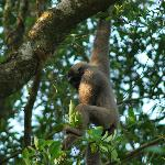 our neighbors: gibbons