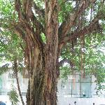 A wish-tree in the Sultan Park