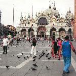 i piccioni sono a Venezia....