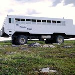 Summer Tundra Buggy tours allows guests to get off the buggy and explore the tundra