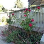 Flower covered deck/patio