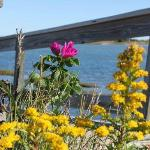 Flowers at Gray's Beach