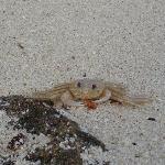 oops... crab
