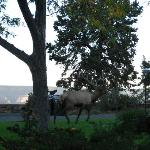 Great view with elk outside your window