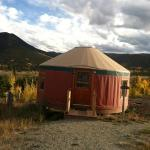 black bear yurt