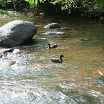 Ducks in Oak Creek (taken from the creekside dining area)