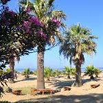 Blick in die Palmen