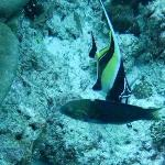 Diving in Praslin