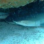 4x Sharks