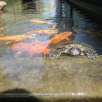 Mr Turtle!