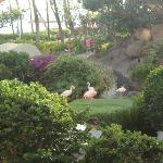 Pink Flamingos on the resort grounds
