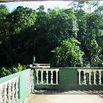 Rain forest terrace