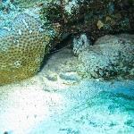 Small Moray eel.