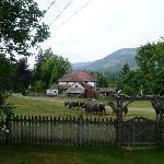 morning buffalo parade