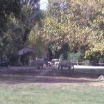 Safaripark ca. 50km entfernt