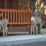Two deer outside the Inn. Wildlife is all around