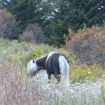 Wild pony on Wilburn Ridge
