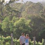 Dingo Creek Vineyard Foto
