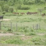 Scenic Pasture
