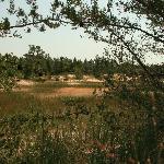 Island Trail, Ludington State Park