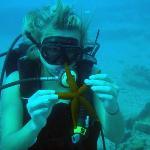 Beginner's Dives