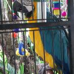 Odie, the hotel's Blue & Gold Macaw