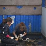 Dingle Wildlife & Seal Sanctuary : it's tough work feeding the seals