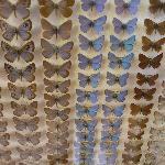esapolis. teche con farfalle