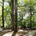 Pinewood Lodge picnic and barbeque area
