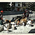 Dog-walkers in Recoleta