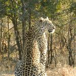 Leopard - beautiful!