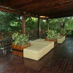 Jungle view adjacent to Resort Entrance