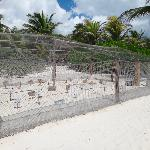 Sea Turtle Egg Sanctuary
