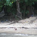 Dirty Beach belong to resort