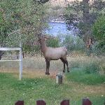 Goodmorning from the elk visitor